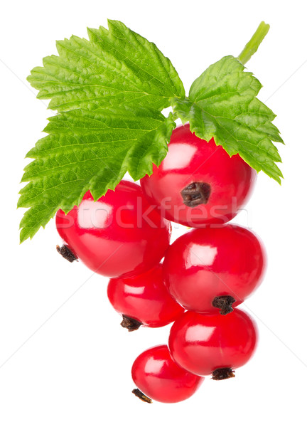 Red currant with leaves Stock photo © Givaga