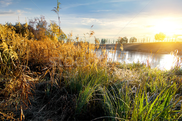 Dry grass on river Stock photo © Givaga