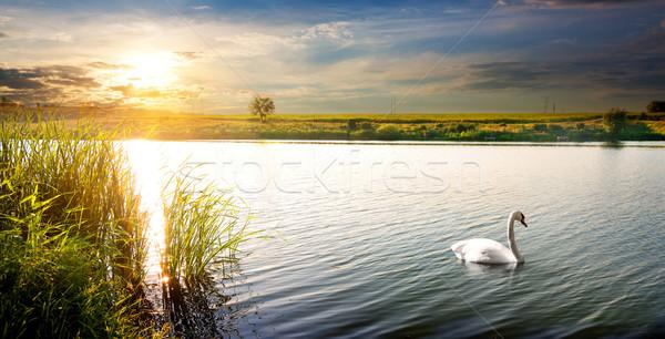 лебедя закат белый реке небе дерево Сток-фото © Givaga