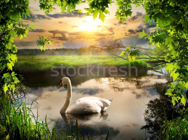 Hattyú tavasz reggel folyó erdő naplemente Stock fotó © Givaga