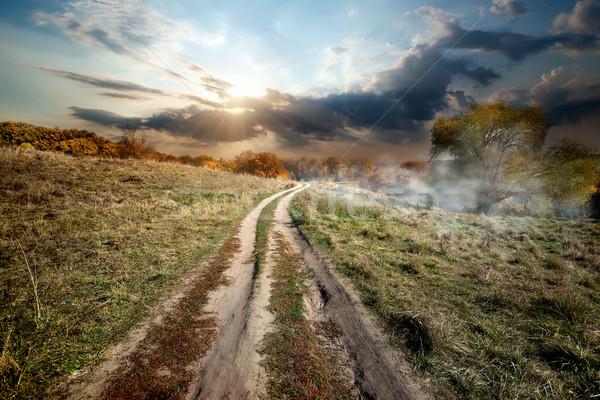 тумана дерево трава природы Сток-фото © Givaga