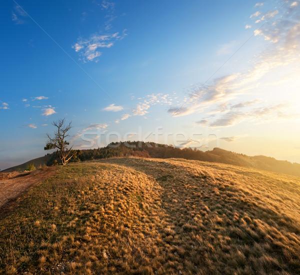 Grass in mountains Stock photo © Givaga