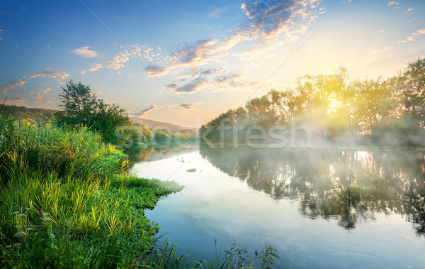 Reeds by the river Stock photo © Givaga