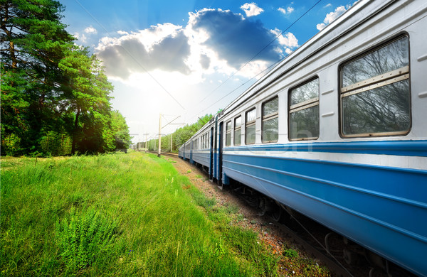 Train and pine forest Stock photo © Givaga