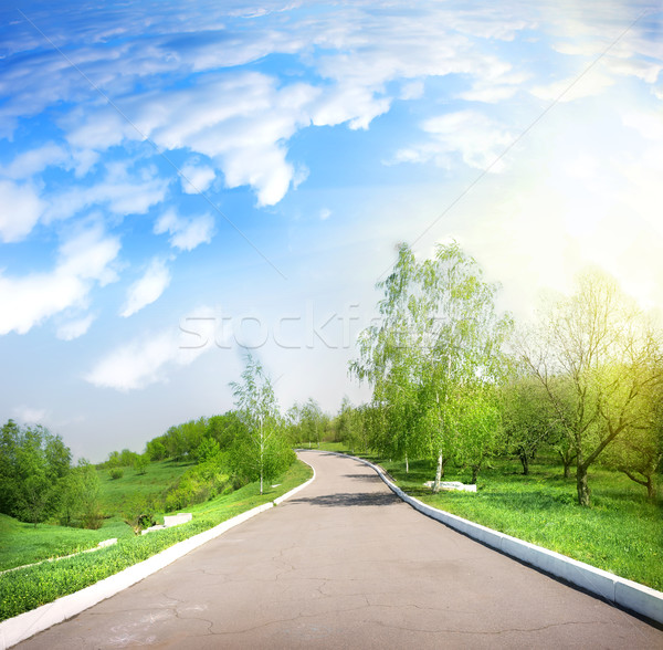 Paved road in a green park Stock photo © Givaga