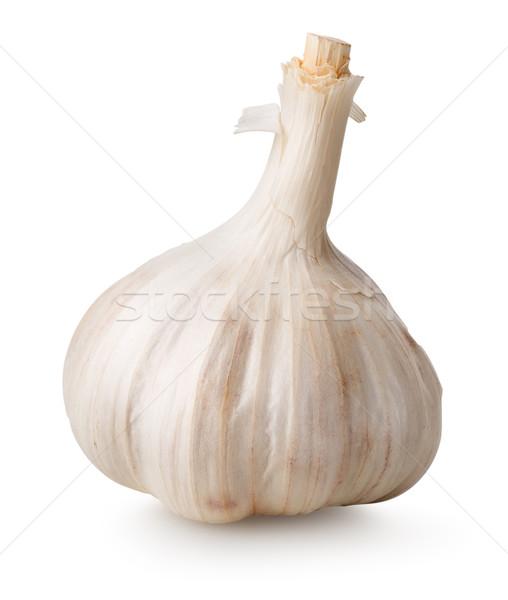 White garlic Stock photo © Givaga