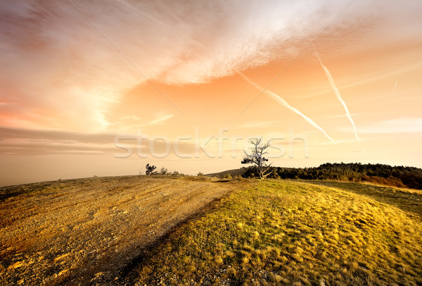 Pink sunset in autumn Stock photo © Givaga