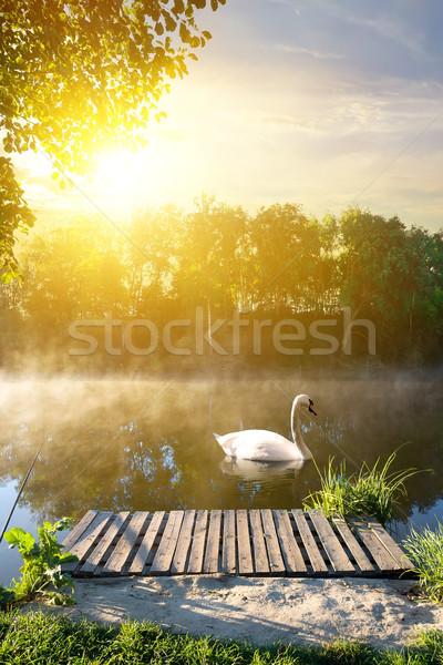 Swan mattina legno ponte acqua albero Foto d'archivio © Givaga