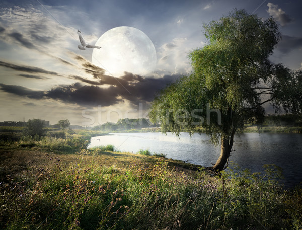 Willow and moon Stock photo © Givaga