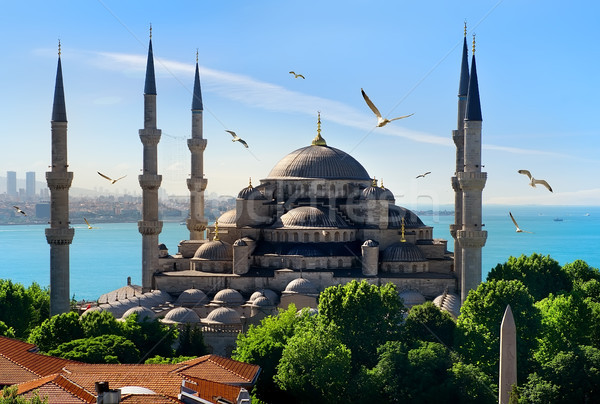 синий мечети Чайки Стамбуле небе морем Сток-фото © Givaga