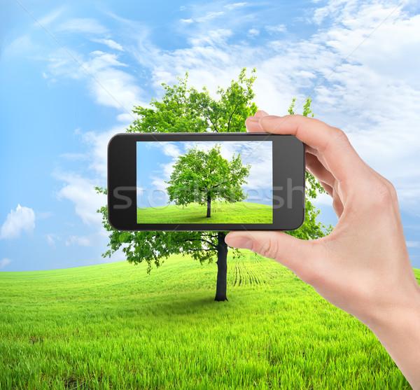 Telefon fa mobil kéz mező tavasz Stock fotó © Givaga