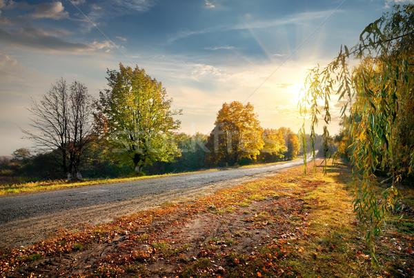Road and autumn Stock photo © Givaga