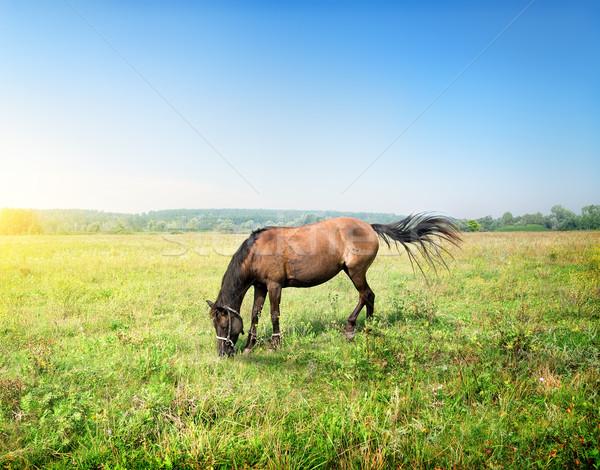 At çayır güneşli bahar sabah çim Stok fotoğraf © Givaga