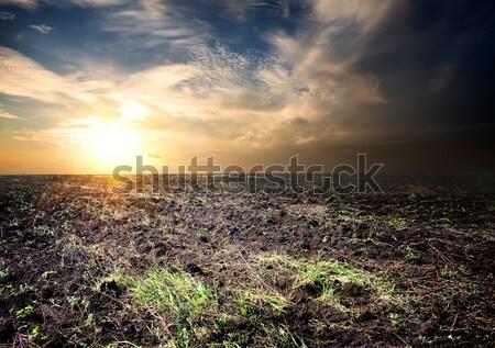 Nascer do sol cultivado campo nuvens primavera sol Foto stock © Givaga