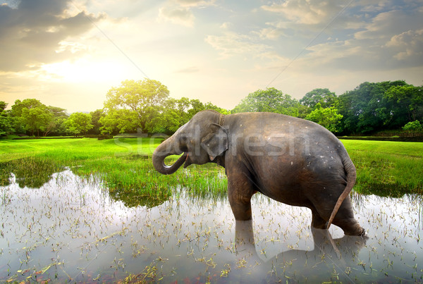 Elefant in pond Stock photo © Givaga