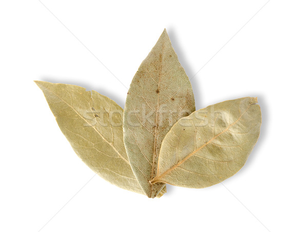 Three bay leaves Stock photo © Givaga