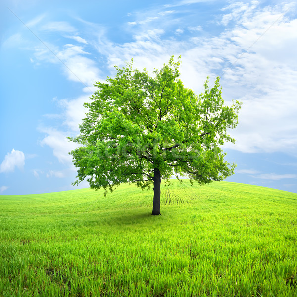 árbol campo primavera cielo naturaleza Foto stock © Givaga