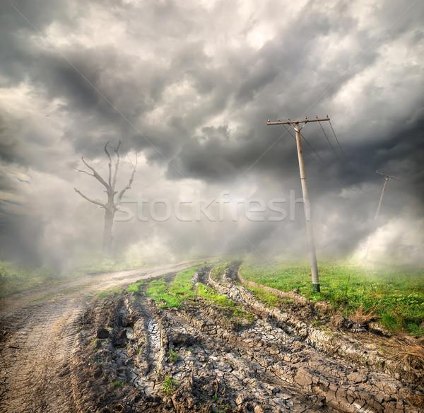 Estrada rural dente árvore grama paisagem verão Foto stock © Givaga