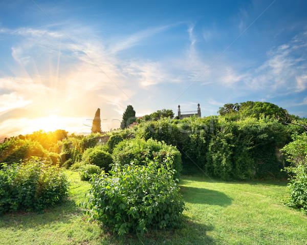Tuin groene gras zonsondergang Stockfoto © Givaga