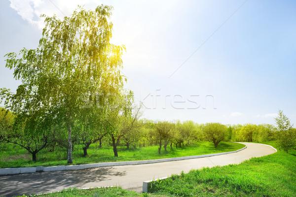 Aszfalt út park napos idő tavasz fű Stock fotó © Givaga