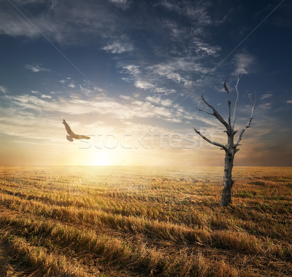 Dry tree in autumnn field Stock photo © Givaga
