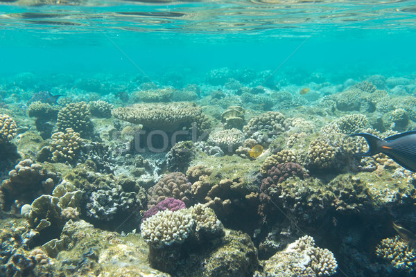 Underwater coral reefs Stock photo © Givaga