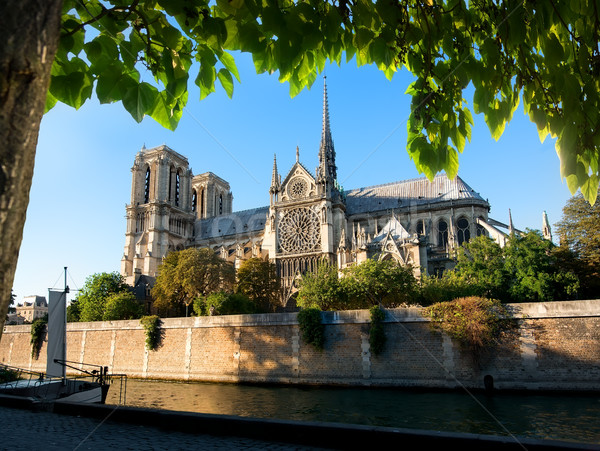 Famoso dama catedral París Francia árbol Foto stock © Givaga