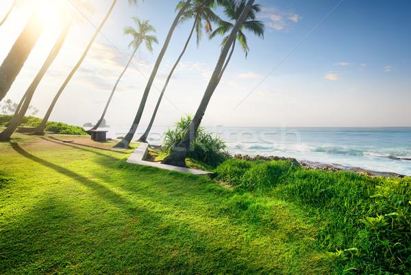 Grama oceano campo grama verde palms Sri Lanka Foto stock © Givaga