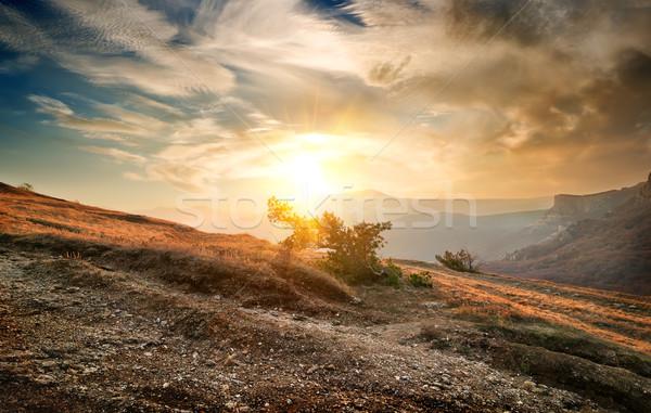 Krzew górskich samotny mętny niebo lasu Zdjęcia stock © Givaga