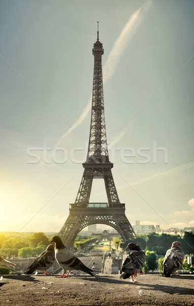 Doves and Eiffel Tower Stock photo © Givaga
