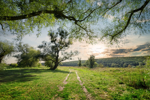 Country  road in summer forest Stock photo © Givaga