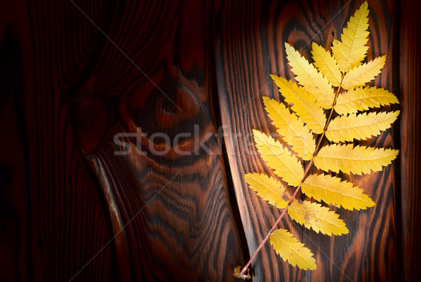 Autumn leaf on the boards Stock photo © Givaga