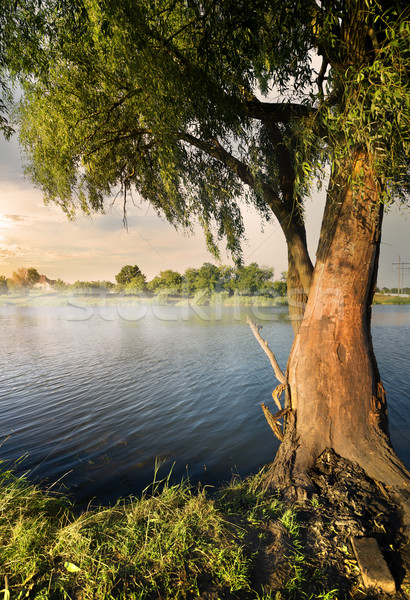 ива реке закат небе деревья лет Сток-фото © Givaga