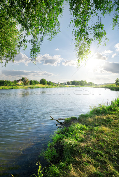 Grass near river Stock photo © Givaga