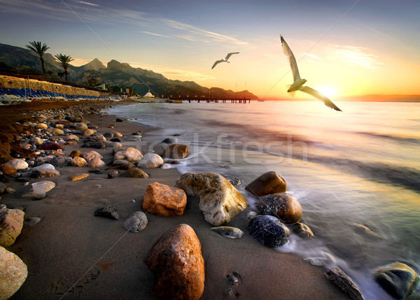Stock photo: Seagulls over beach