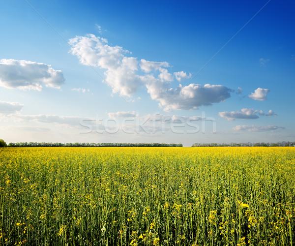 フィールド 黄色の花 青空 空 春 風景 ストックフォト © Givaga