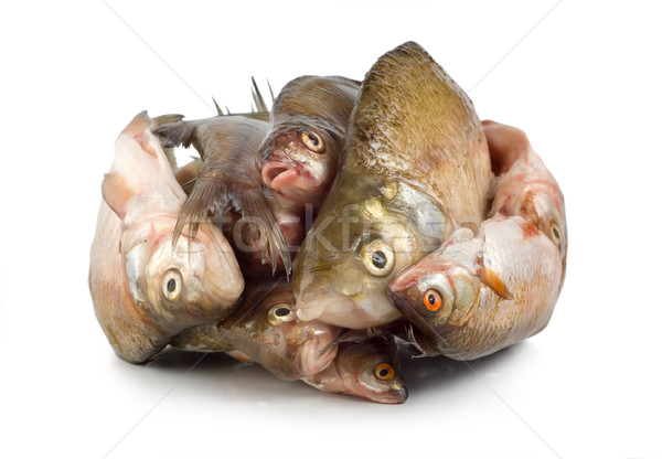 Frozen fish isolated Stock photo © Givaga