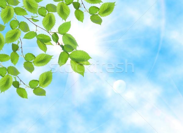 Zöld levél ellenkező nap égbolt Stock fotó © Givaga