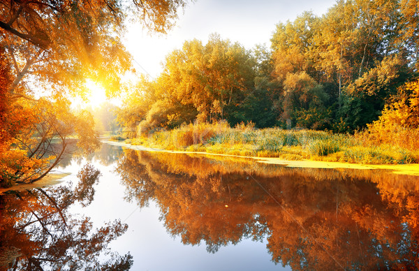River in a delightful autumn forest Stock photo © Givaga