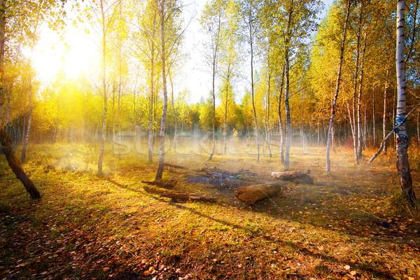Birches in autumn Stock photo © Givaga