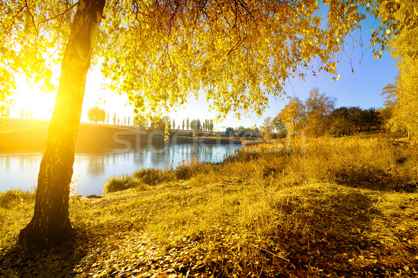 Colorful autumn on river Stock photo © Givaga