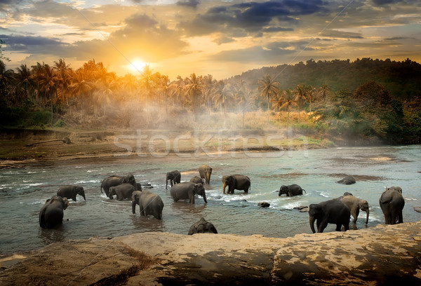 Wildlife in jungles Stock photo © Givaga