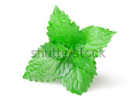 Verde de folhas isolado branco Foto stock © Givaga