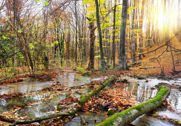 Vízesés folyó erdő hegy ősz fa Stock fotó © Givaga