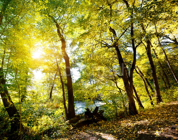 Forest on slope Stock photo © Givaga