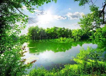 緑 森林 川 晴れた 夏 日 ストックフォト © Givaga