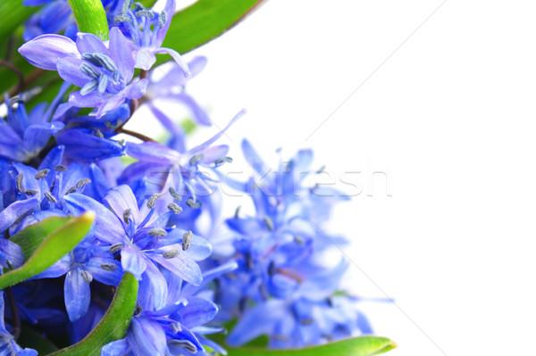 Tavaszi virágok gyönyörű fehér virágok természet szépség Stock fotó © gladcov