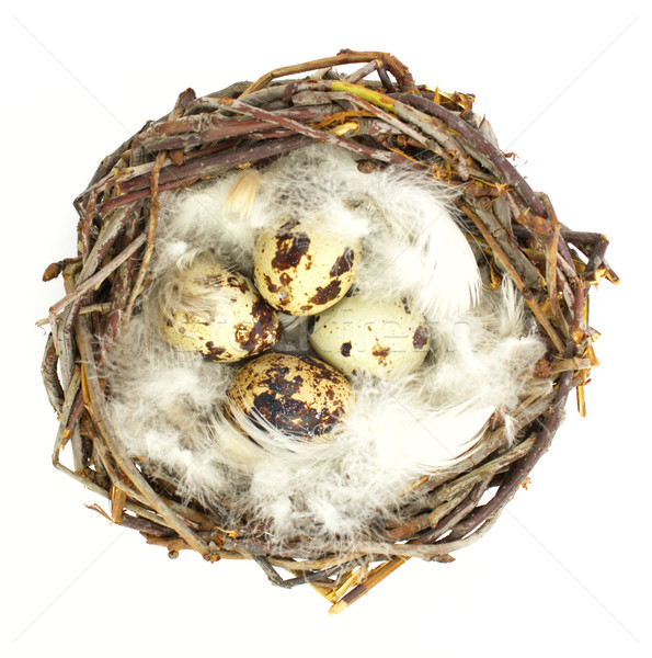 Quail eggs in nest Stock photo © gladcov