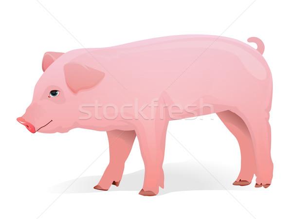 豚 現実的な 実例 背景 生活 白 ストックフォト © gleighly