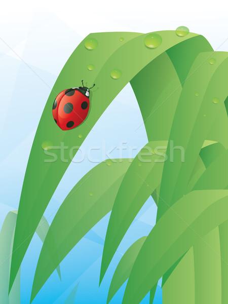 てんとう虫 葉 幸せ 庭園 夏 色 ストックフォト © gleighly